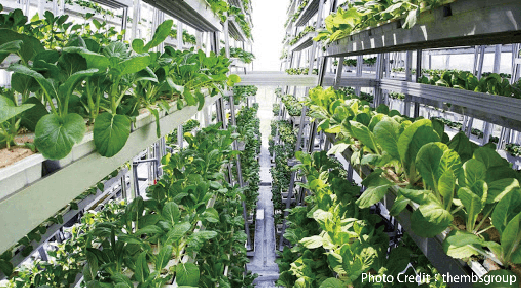 貨櫃車種草莓?LED燈種青菜?辦公大樓變開心農場?這三家新創公司,讓每個人都可以種食物